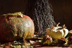Pumpkin with pattypan squash stock photo