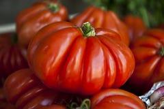 Pumpkin Pepper Stock Photos