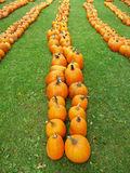 Pumpkin perspective Stock Photography