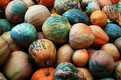 Pumpkin. Photo.harvest . additional formats not available Royalty Free Stock Photos