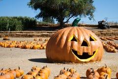 A Pumpkin Photo-Op Stock Photo