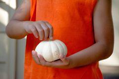 Harvest. Pumpkin pick up for harvest celebration. Small one is perfect for little one Stock Images