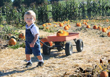 Pumpkin Picking. Young toddler boy pulling a red wagon in a pumpkin patch Royalty Free Stock Image