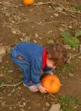 Pumpkin Picking. Little girl choses a pumpkin royalty free stock photos