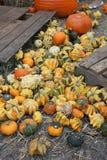 Pumpkin. A picture of a pumpkin patch stock photos
