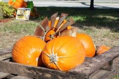 Pumpkin. A picture of a pumpkin patch stock photo