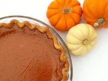 Pumpkin pie. With mini pumpkins stock photography
