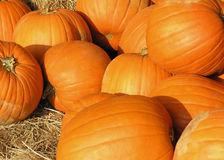 Pumpkin Pile. Pumpkins piled on barrels of hay Royalty Free Stock Photos