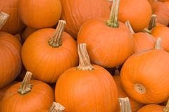 Pumpkin pile. A pile of pumpkins for sale Royalty Free Stock Image