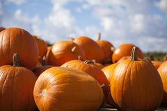 Pumpkin Pile. A collection of pumpkins gathered against a blue sky, ready to be sold stock photo