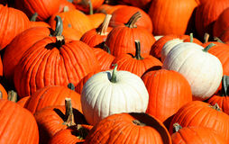 Pumpkin Pile 2. Pile of pumpkins at the local produce stand Stock Photos