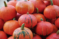 Pumpkin pile Stock Photography