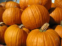 Pumpkin pile. Very close up of the pumpkin harvest stock image