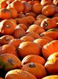 Pumpkin Pile Stock Photography