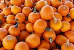 Pumpkin Pile Royalty Free Stock Photos