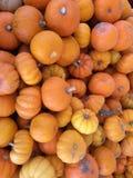 Pumpkin Pile Stock Photos