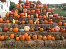 Pumpkin pile. Pumpkins stacked in a farm shop Stock Photography