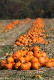 Pumpkin piles Stock Photography