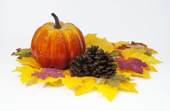 Pumpkin and Pine Cones Royalty Free Stock Images