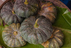 Pumpkin placed on the market. Royalty Free Stock Image