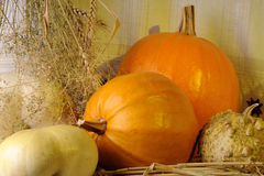 Pumpkin and plants isolated Stock Photography