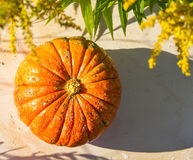 Pumpkin and plants in the summer Royalty Free Stock Photography
