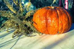 Pumpkin and plants in the summer Stock Photography