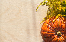 Pumpkin and plants in the summer Royalty Free Stock Photos