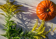 Pumpkin and plants in the summer Royalty Free Stock Image