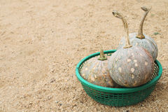 Pumpkin in plastic basket Royalty Free Stock Photography