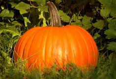 Pumpkin Portrait Royalty Free Stock Photography
