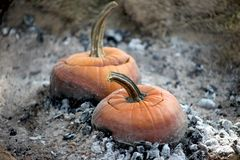 Pumpkin pots with lids cooking soup over hot embers and ashes stock photo