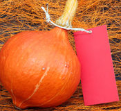 Pumpkin with price tag Royalty Free Stock Images