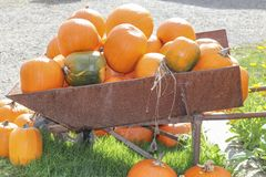 Umpkins at the Pumpkin Patch Royalty Free Stock Photography