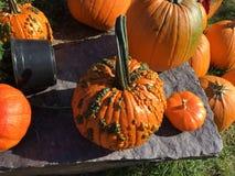 Pumpkin, pumpkin Stock Photos