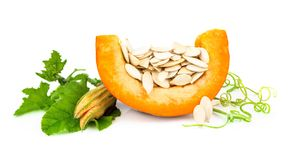 Pumpkin with pumpkin seeds Royalty Free Stock Photography