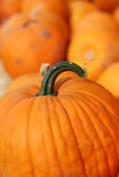 Pumpkin Among Pumpkins Stock Images