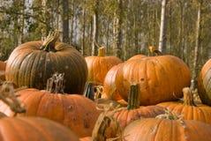 Pumpkin on Pumpkins Stock Photos
