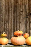 Pumpkin. S on display at local farm Stock Photography