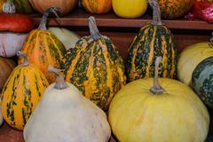 Pumpkin with pupyrishkami stand on the market shelves. Royalty Free Stock Photo