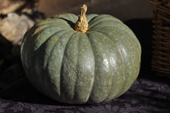 Pumpkin on Purple. Thanksgiving harvest pumpkin squash still life Stock Image