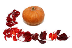 Pumpkin with red leaves. Isolated on white background Stock Photo