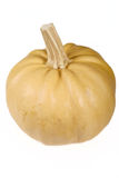 Pumpkin removed close up Royalty Free Stock Image