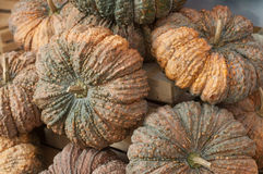 Pumpkin at retail shop Stock Photo