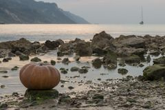 Pumpkin on the rock at sunset stock images