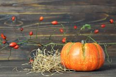 Pumpkin and rose hip branch. In background royalty free stock image