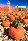 Pumpkin sale Royalty Free Stock Photography