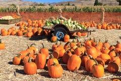 Pumpkin sale Royalty Free Stock Image