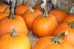 Pumpkin Sale Stock Photography