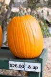 Pumpkin on sale. stock photography